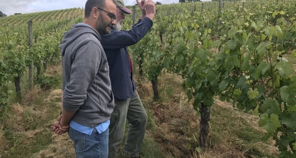 Belle Pente vineyard featured in Slow Wine Guide